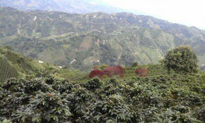 Oversikt dalen ved La Arabia i Colombia